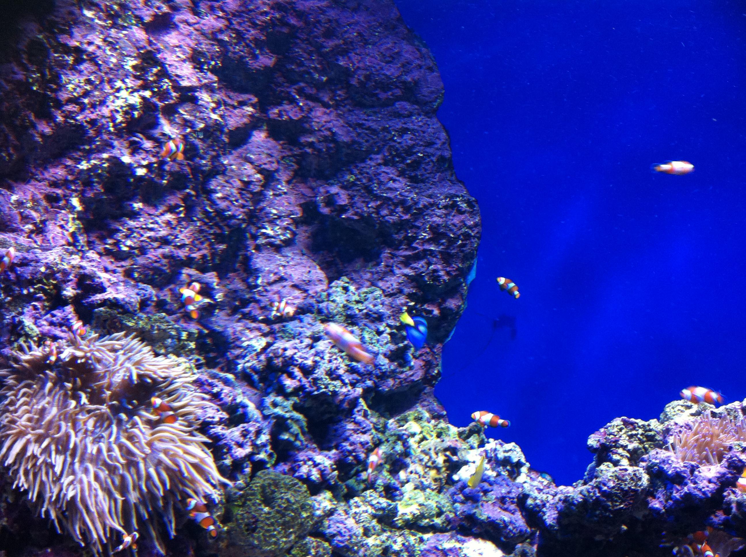 SG 4/50 S.E.A. Aquarium/ S.E.A. 海洋館 – happyslipperfeet