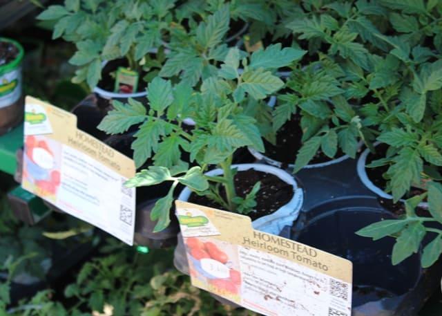 Home Gardener Raised Garden Box Kit