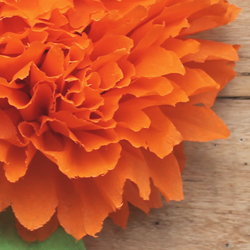 Easy to make crepe paper flowers for Day of the Dead