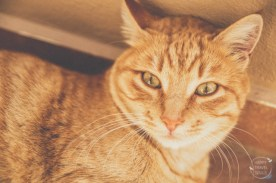 Ginger Cat at Mávros Mólos