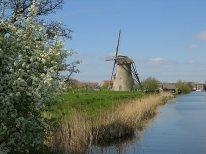 106 moulin & arbre