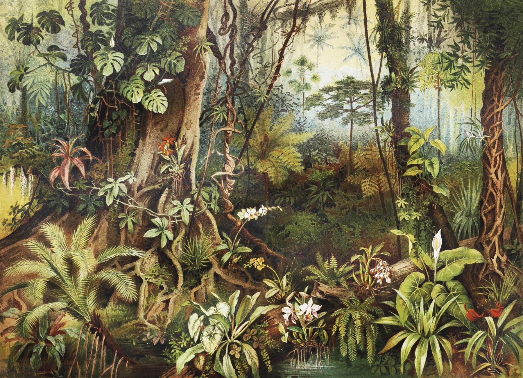 Buy Vintage Jungle Wall Mural Free Us Shipping At