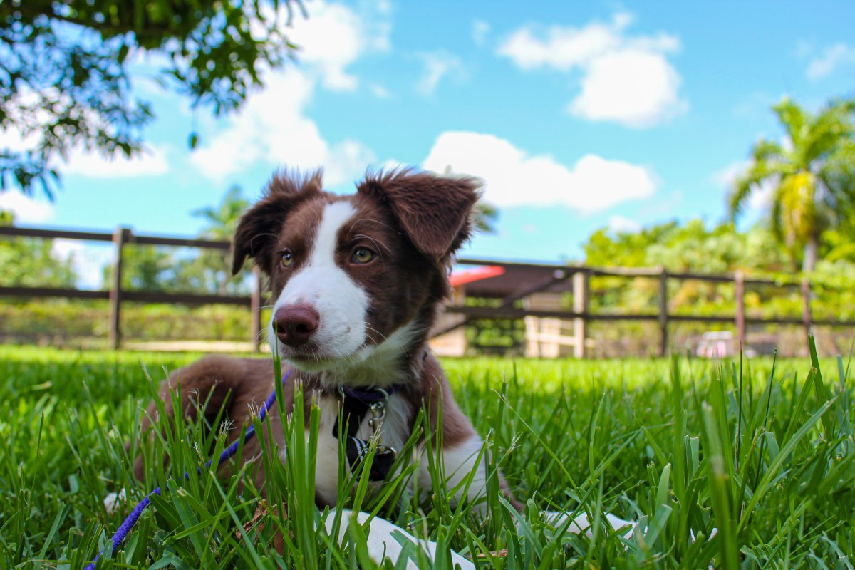 Link to overnight dog lodging