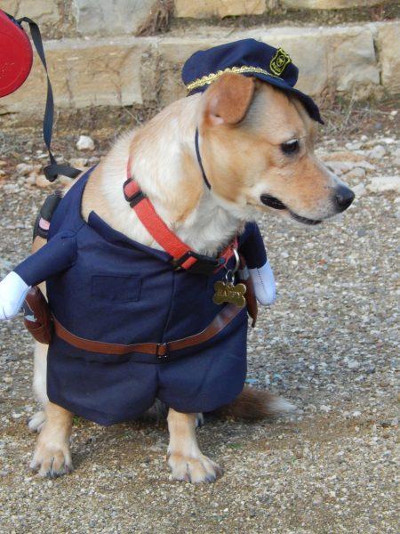 Halloween Pitou Minou