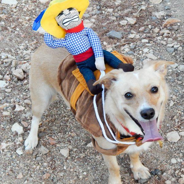 Halloween Pitou Minou Happywoofy