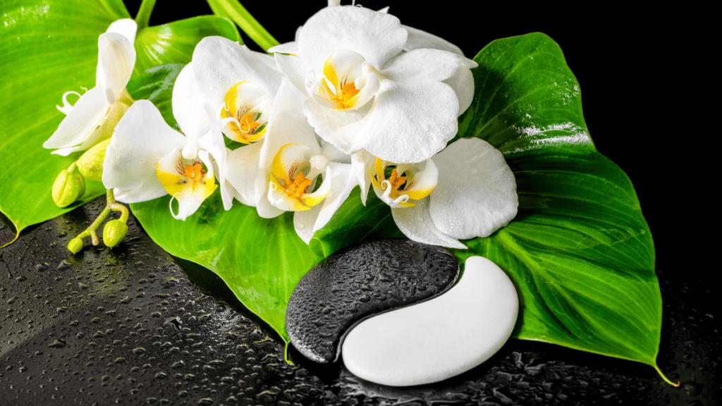 Yin Yang Yoga Workshop