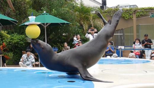 写真付きで解説!サンシャイン水族館アシカショーは何度でも見たい!