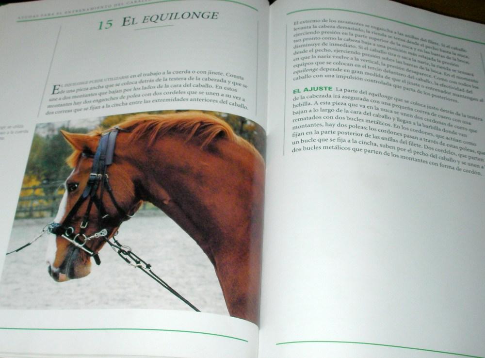 Ayudas para entrenar caballos. El equilongue (5/6)