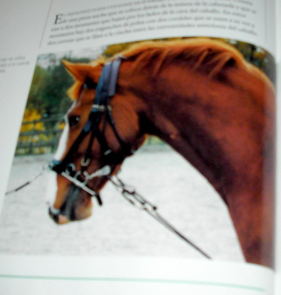 Ayudas para entrenar caballos. El equilongue (6/6)
