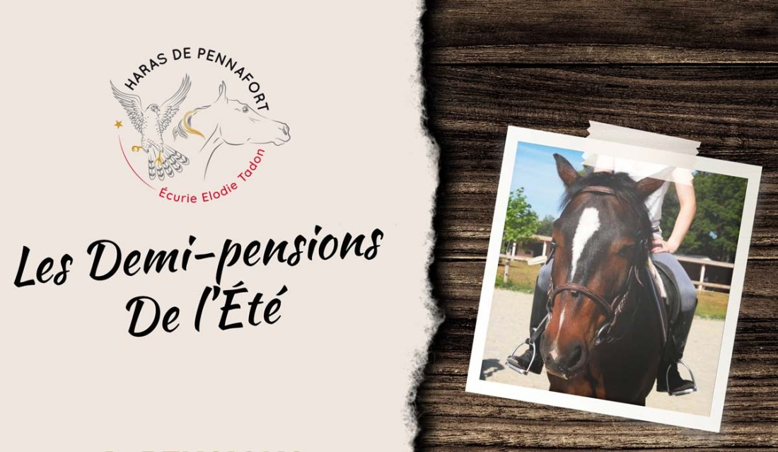 demi-pension-equitation-var-cheval-poney-club