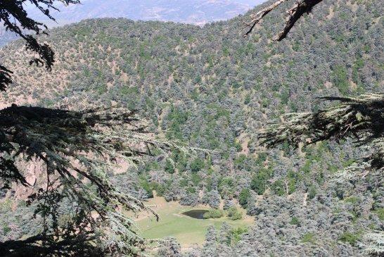Parc National de Theniet El Had 3