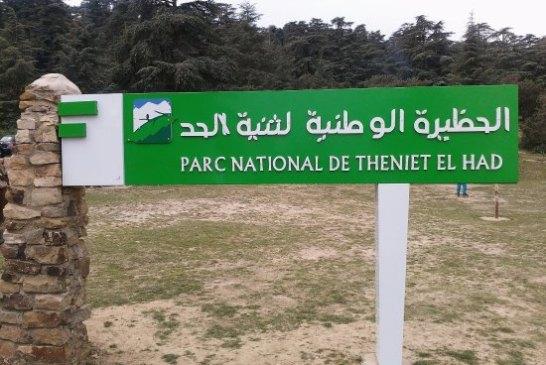 Parc National de Theniet El Had