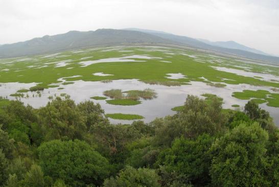 Parc National d'El kala 1