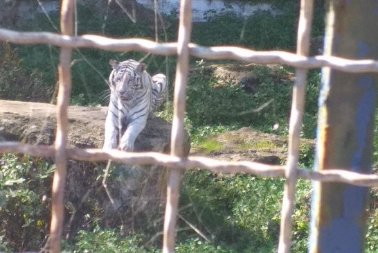 Cercle des Fauves - Parc Zoologique 3 - Credit Harba-DZ