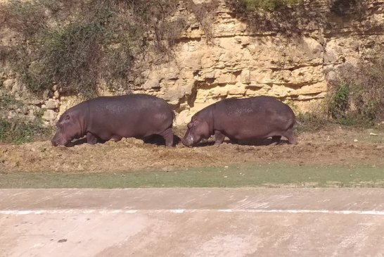 Cercle des Fauves - Parc Zoologique 5 - Credit Harba-DZ