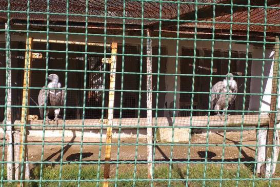 Cercle des Fauves - Parc Zoologique 6 - Credit Harba-DZ