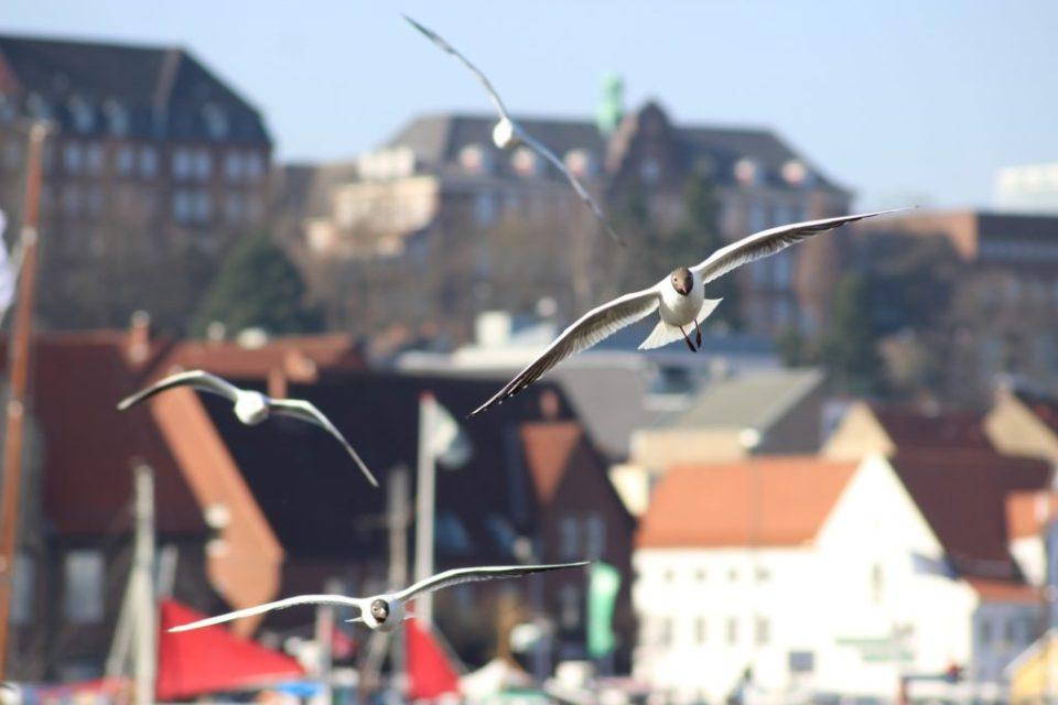Flensburg is always wor