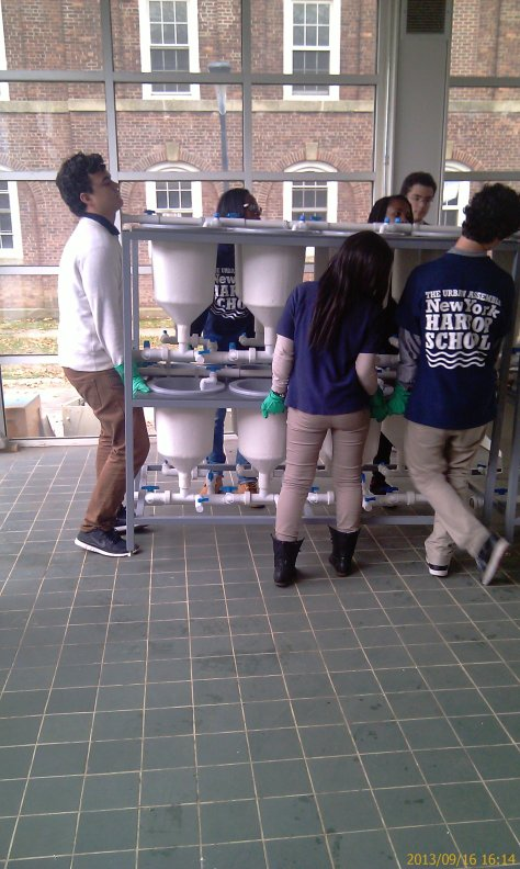 With the generous support of our scholars, we were able to move our lab to the Marine Science room in 3 days.