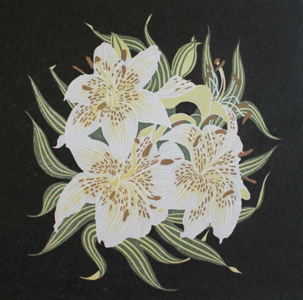asiatic lily (Black)