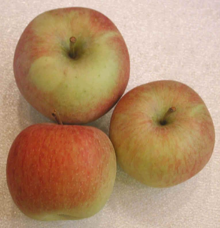 i-apples-fuji
