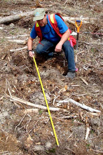 treeplanting forester