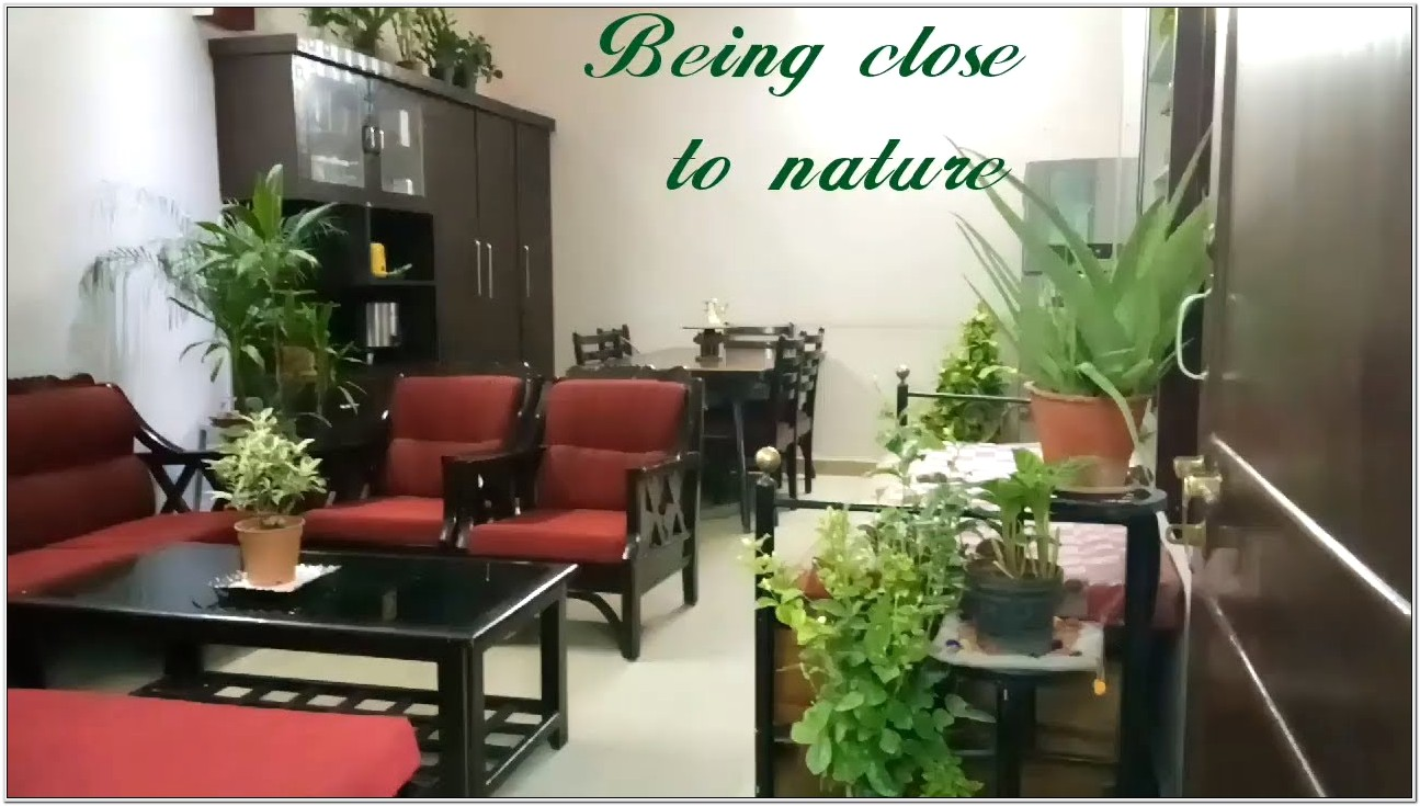Decorate Living Room With Indoor Plants India