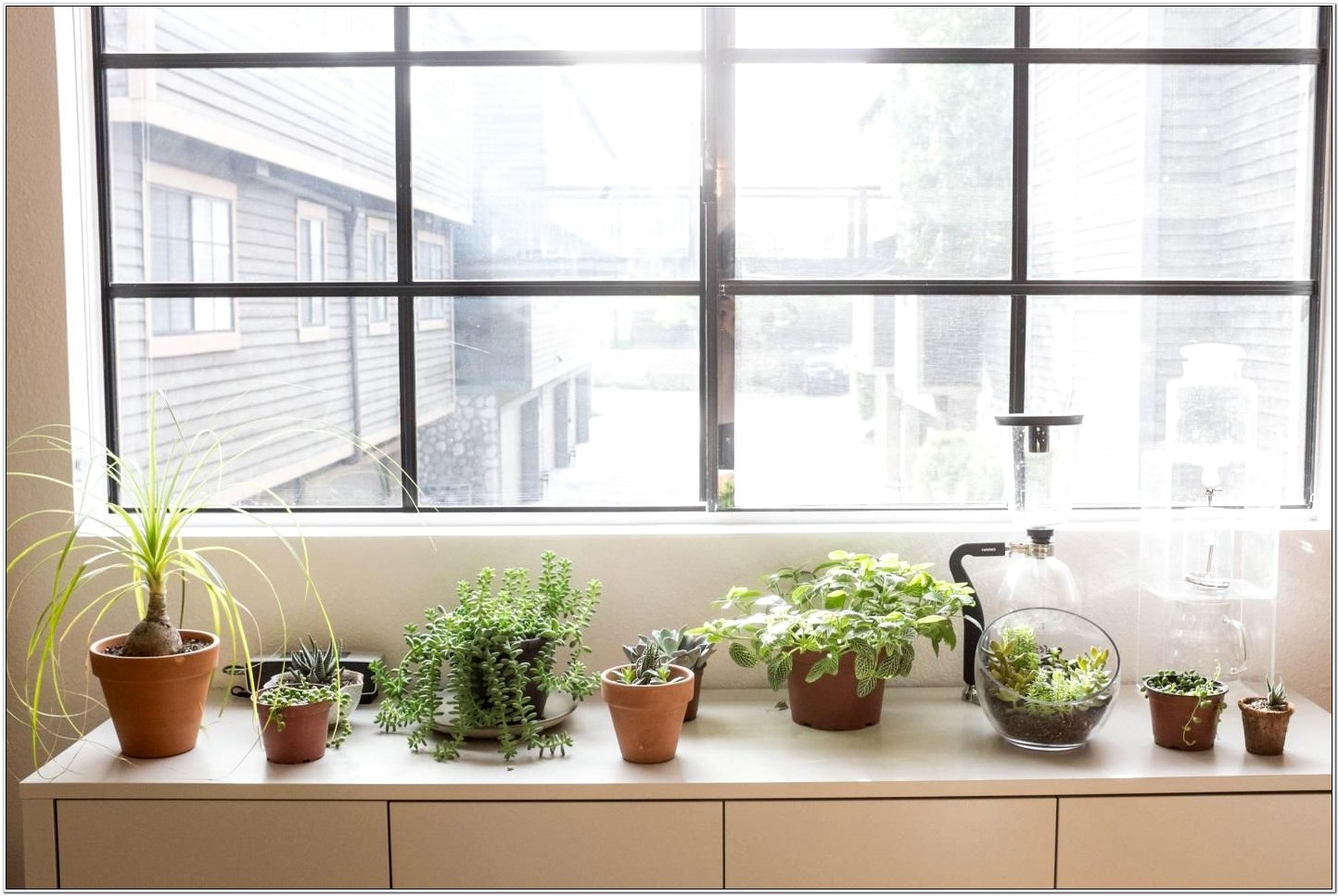Decorating Living Room With Indoor Plants
