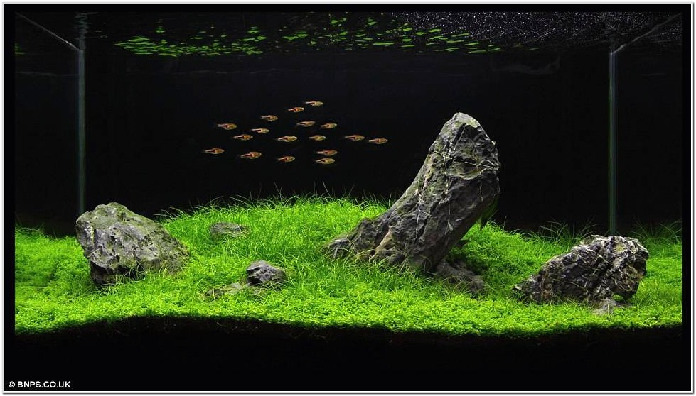 Fish Tank Designs For Small Living Room