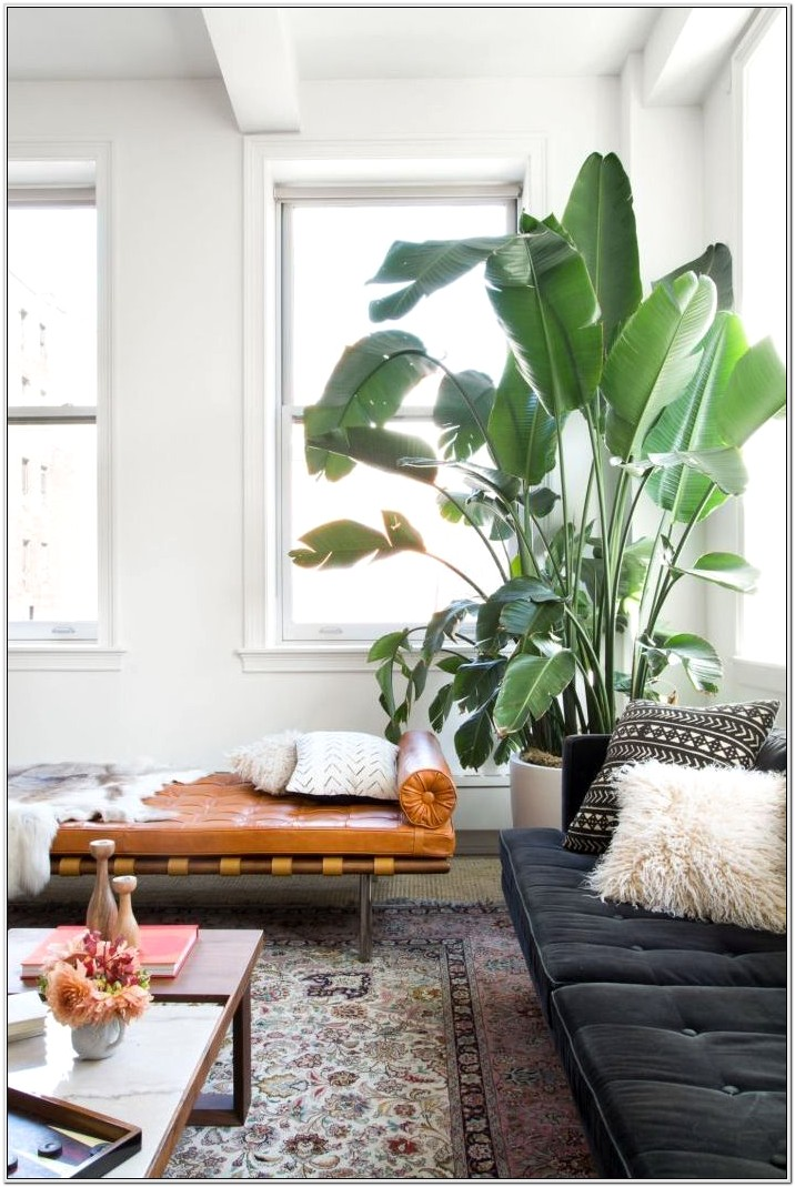 Living Room Indoor Plant Ideas