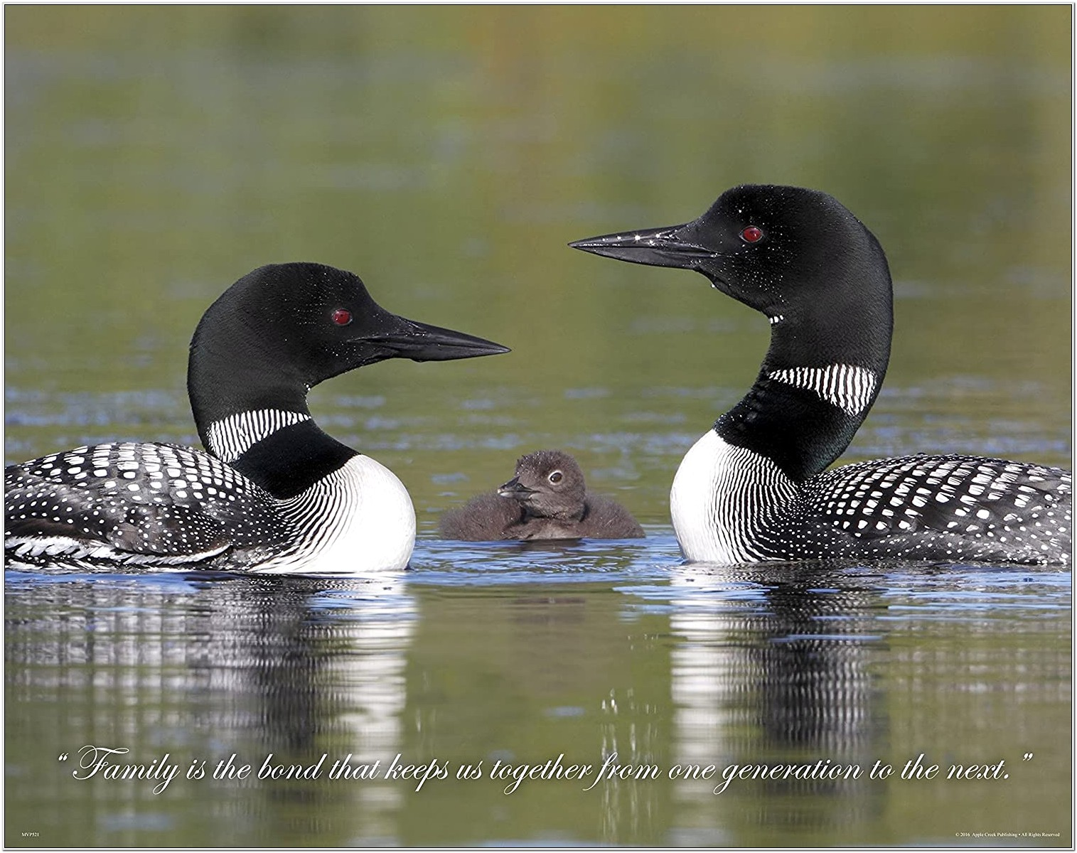 Living Room Wall Decor Pictures Of Loons