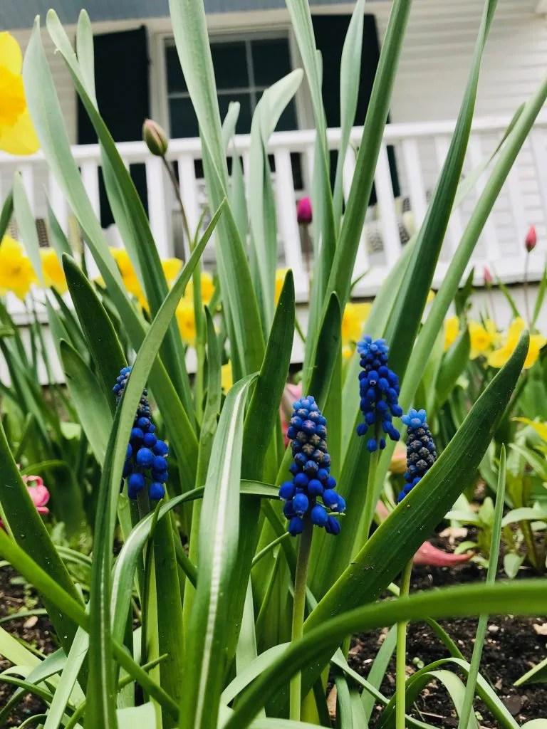 Spring flowers in fryeburg maine