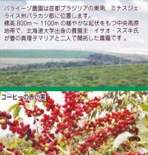 パライーゾ農園の全景とコーヒーの赤い実