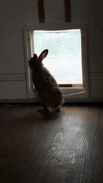 looking through the doggie door