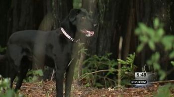 Technology aids crews in rescuing dog-walker, 6 dogs that fell down ravine