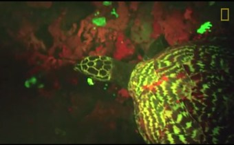 First Ever Glowing Sea Turtle Is Discovered In South Pacific (WATCH)