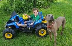 Pit Bulls Save Children From Venomous Snake Lurking in Their Yard