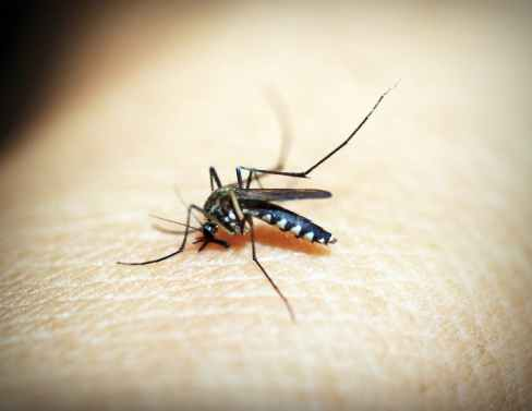 Unscheduled Mosquito Control Spraying in Prince George's, Harford Counties