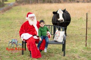 Photobombing Cows!