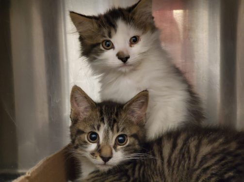 The Humane Society of Harford County is Expecting!