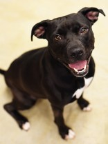 Dog of the Week – APACHE