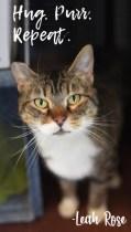 Cat of the Week – LEAH ROSE