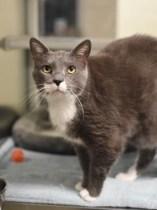 Cat of the Week – FREDDIE
