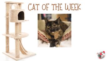 Cat of the Week – IRIS