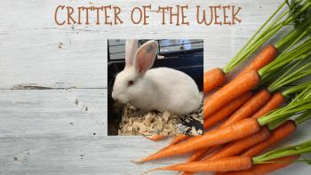 Critter of the Week – CINNABUN 2