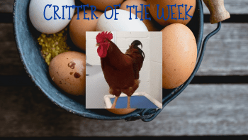 Critter of the Week – RALPHIE