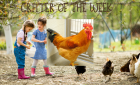 Critter of the Week – SQUASH