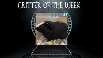 Critter of the Week – HUCKLEBERRY