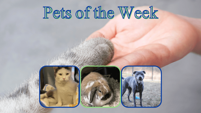 Pets of the Week for January 26, 2021