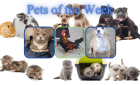 Pets of the Week for February 2, 2021