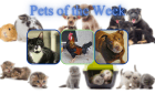 Pets of the Week for February 16, 2021